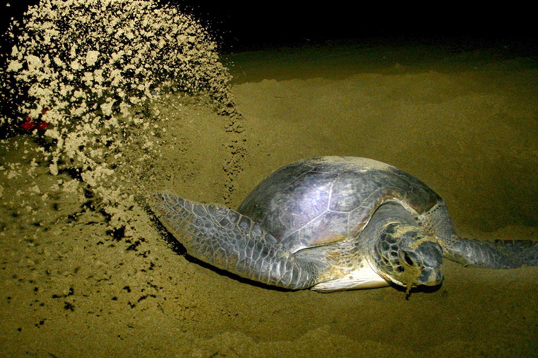 Paket Wisata Kawah Ijen Pantai Sukamade Kab Banyuwangi