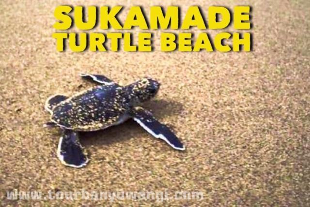Pantai Sukamade Banyuwangi Mempesona Paket Wisata Kab