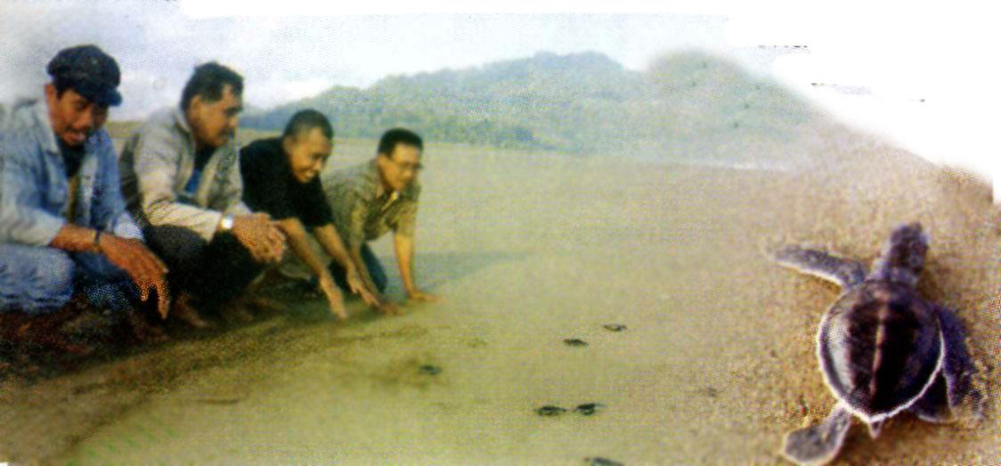 Pantai Sukamade Kabupaten Banyuwangi Wisata Jawatimuran Kab