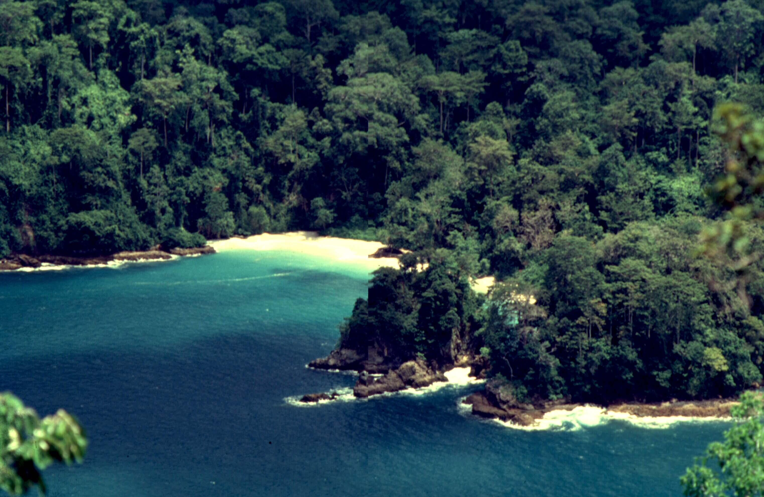 Pesona Pantai Sukamade Kab Banyuwangi