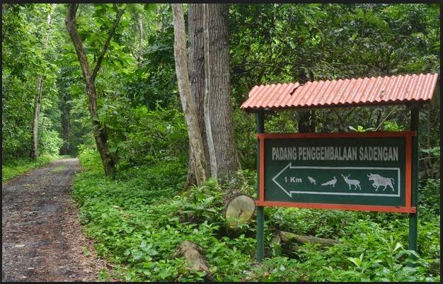 Tourism Wisata Kuliner Pantai Plengkung Banyuwangi Objek Lebih Kenal Sukamade