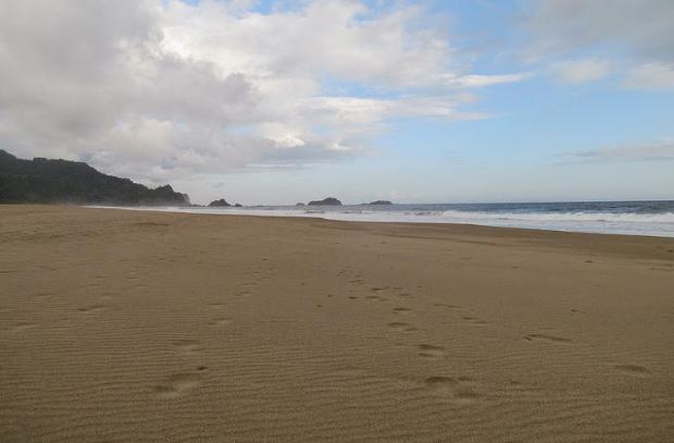Wisata Pantai Sukamade Banyuwangi Menjadi Rumah Bagi Penyu Kab