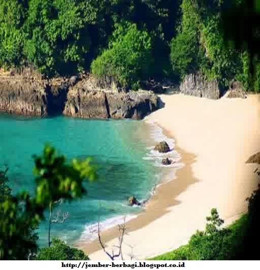Keindahan Teluk Hijau Banyuwangi Wisata Terbauk Pantai Kab