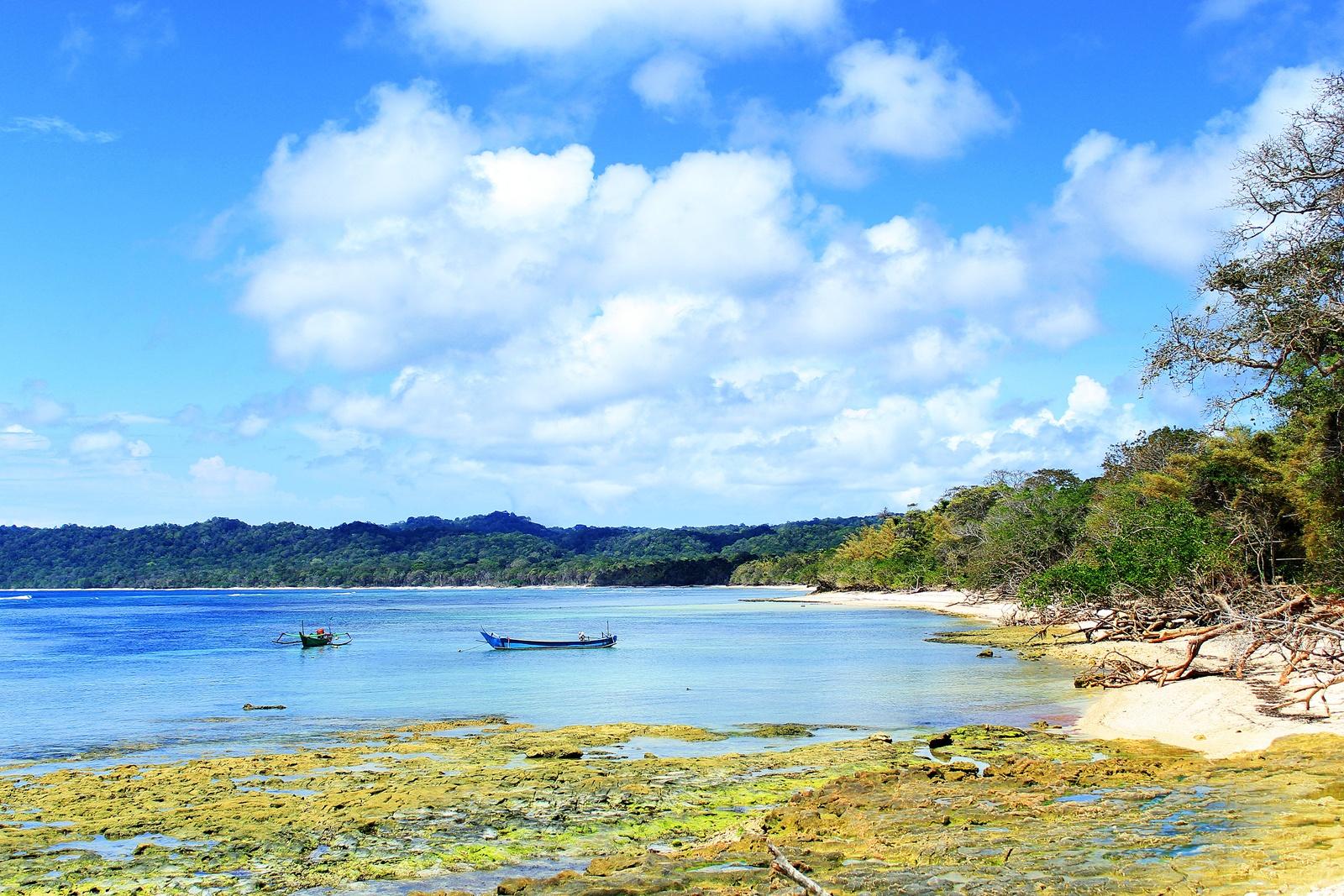 Keindahan Dibalik Kemistisan Alas Purwo World Sekembalinya Pantai Plengkung Menyempatkan