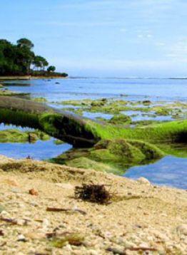 Pantai Nasional Alas Purwo Banyuwangi 1001malam Tempat Menarik Lainya Taman