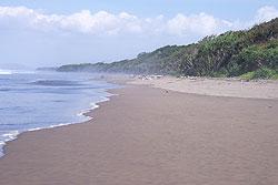 Temukan Berbagai Jenis Penyu Pantai Ngagelan Banyuwangi Terletak Sebelah Barat