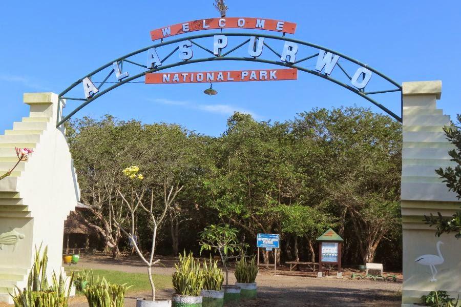Wisata Mangrove Blok Bedul Banyuwangi Pantai Trianggulasi Kab