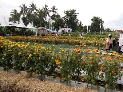 10 Gambar Taman Blambangan Kabupaten Banyuwangi Jawa Timur Hotel 68411
