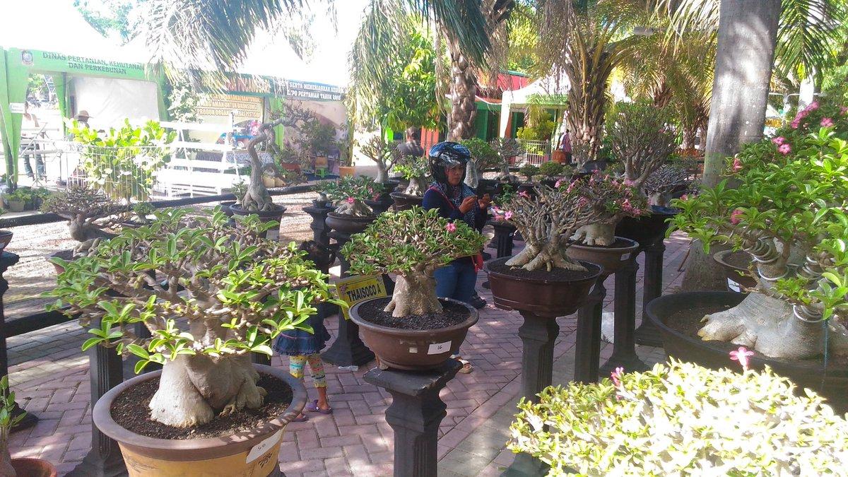 Kabupaten Banyuwangi Twitter Kontes Pameran Bunga Agroexpo 12 06 8