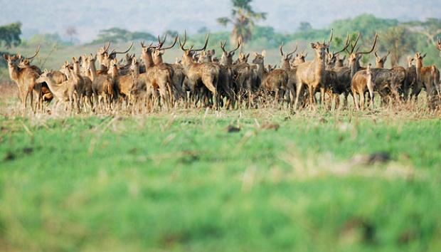 700 Hektare Sabana Taman Nasional Baluran Terbakar Tempo Sekelompok Rusa