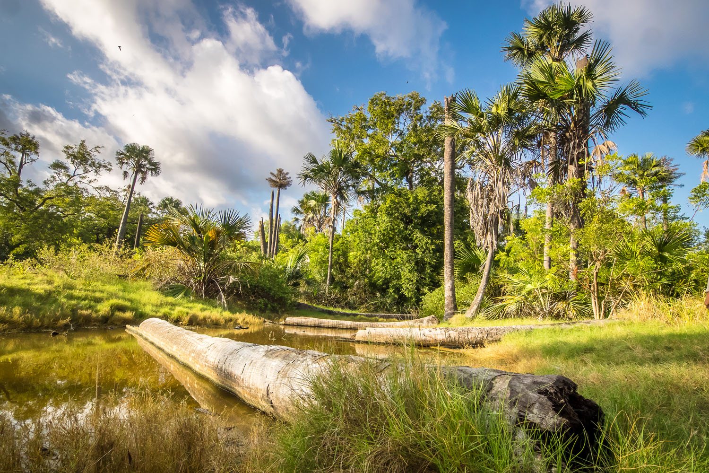 Baluran National Park Africa Java Fantasticranger Lopardo P8041221 Taman Nasional