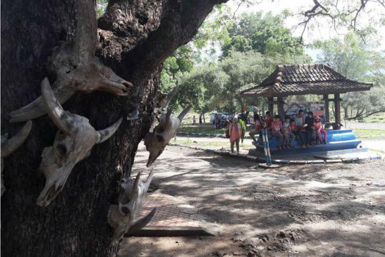 Banyuwangi Merdeka Wisatawan Padati Taman Nasional Baluran 2016 Reporter Suci