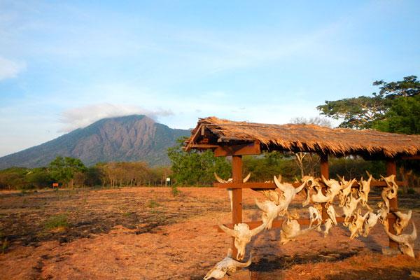 Informasi Lengkap Taman Nasional Baluran Banyuwangi Indonesia Salah Satu Kawasan