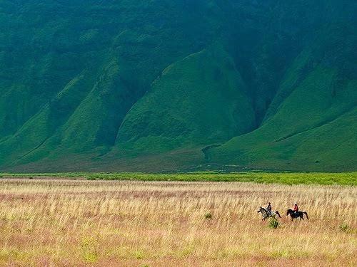 Keindahan Savana Taman Nasional Baluran Blogger Osing Terletak Wilayah Banyuputih