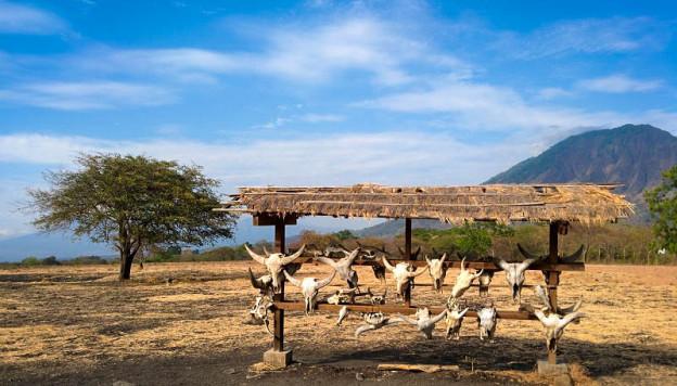 Menjelajahi Africa Taman Nasional Baluran Jawa Timur 2 Kab Banyuwangi