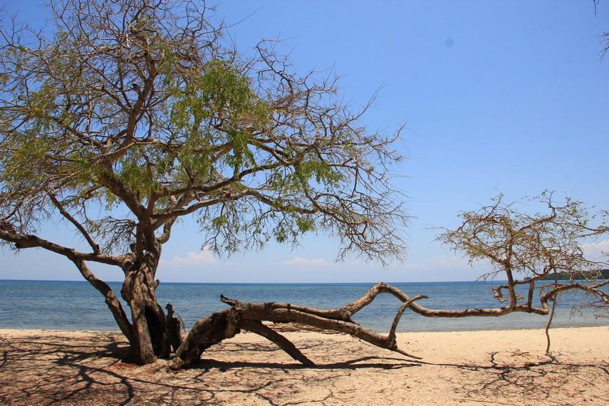 Pesona Menakjubkan Taman Nasional Baluran Sebagai Africa Van Java Keindahan