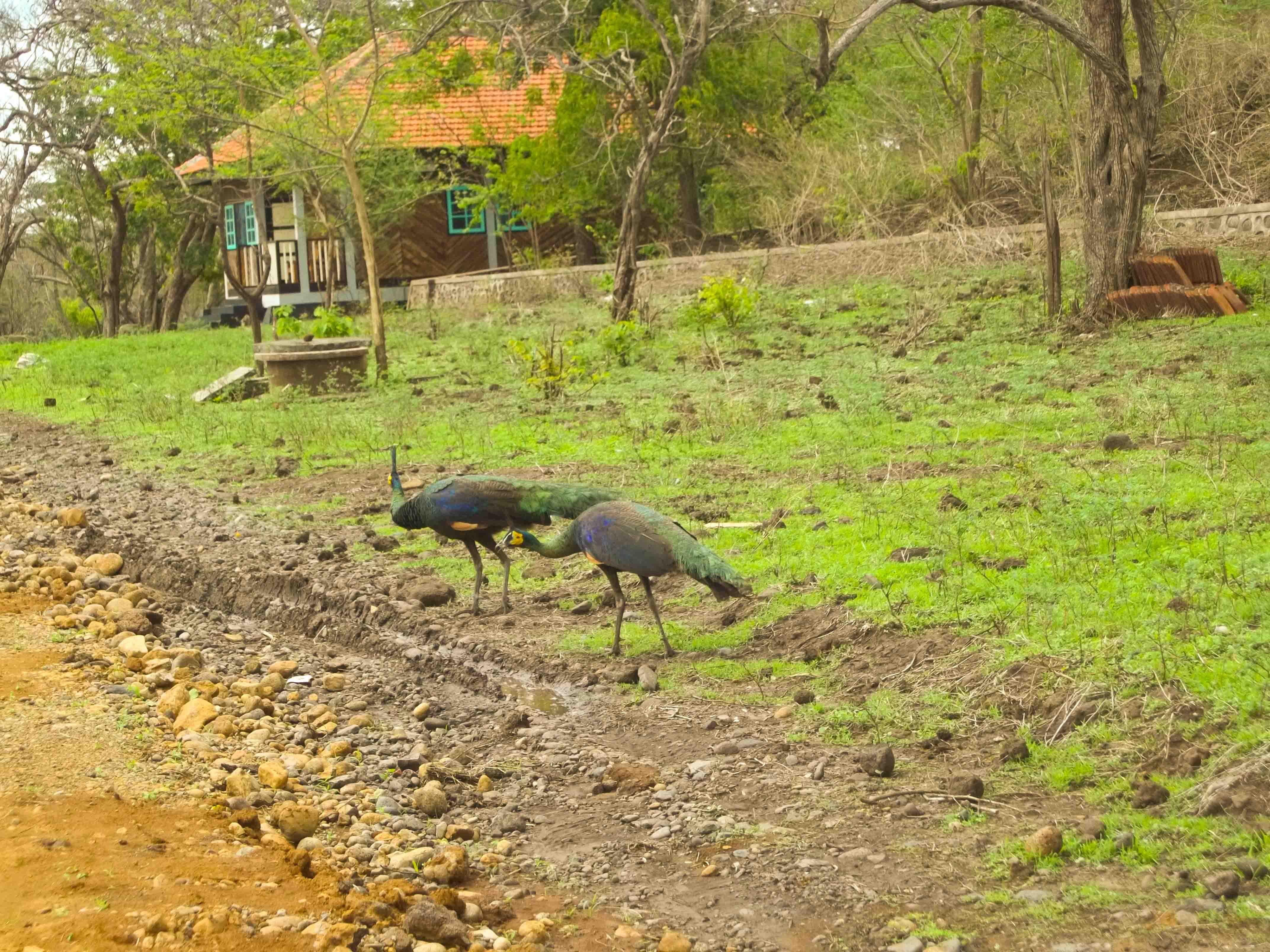 Secuil Kisah Tentang Taman Nasional Baluran Oleh Victor Kurniawan Burung