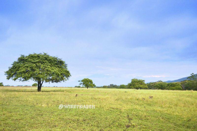 Sejam Jalan Taman Nasional Baluran Winny Marlina Kab Banyuwangi