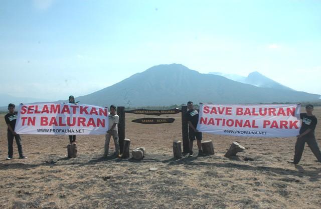 Selamatkan Taman Nasional Baluran Profauna Kelestarian Berada Kabupaten Situbondo Jawa