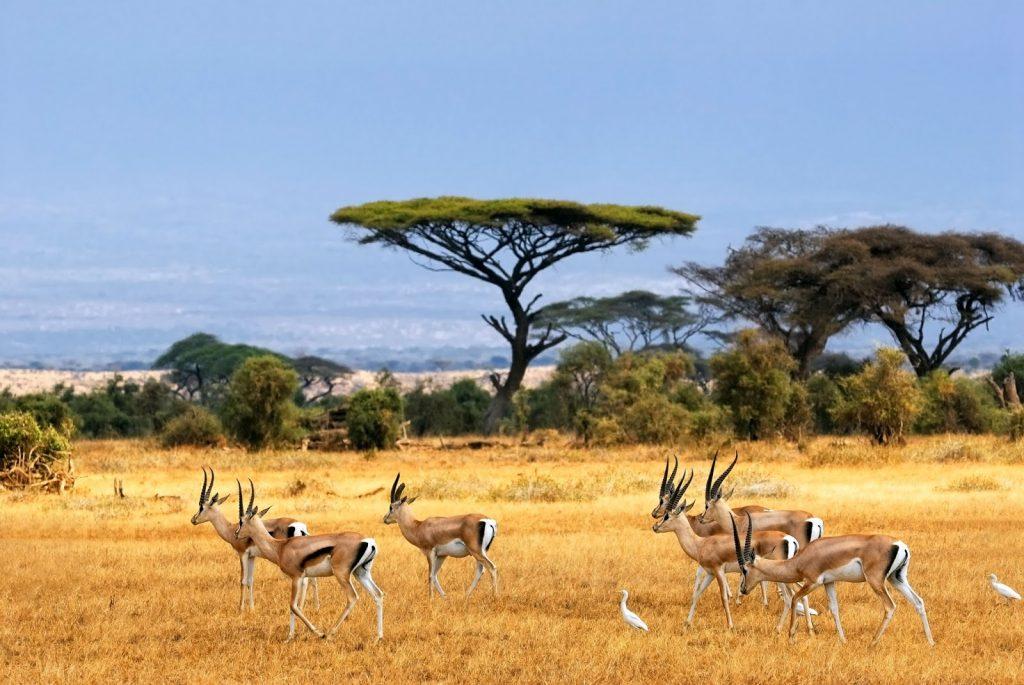 Taman Nasional Baluran Africa Van Java Menyatu Alam Bersama Satwa