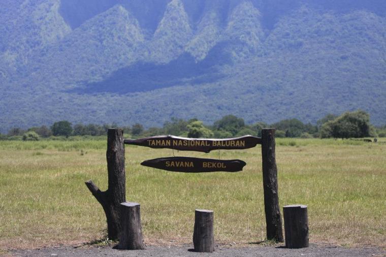 Taman Nasional Baluran Afrika Kecil Diujung Timur Pulau Jawa Savana