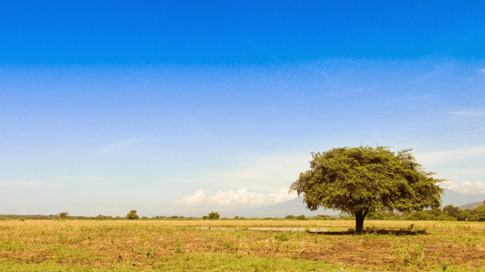 Taman Nasional Baluran Afrikanya Indonesia Jawa Timur Kab Banyuwangi