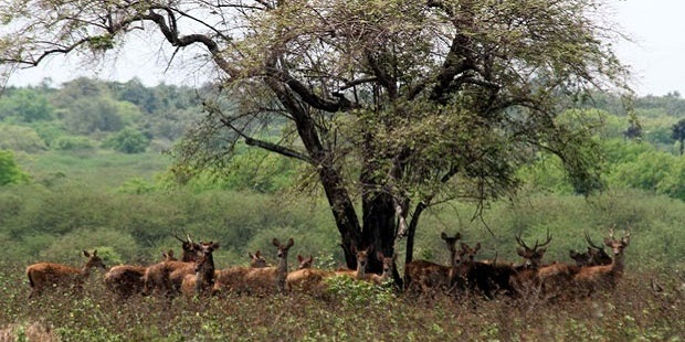 Taman Nasional Baluran Banyuwangi Afrikanya Indonesia Kab
