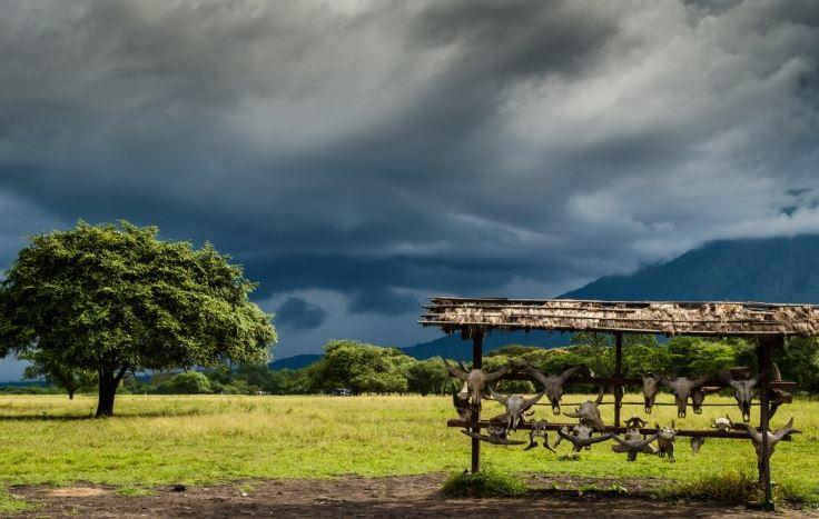 Taman Nasional Baluran Banyuwangi Sauna Tour Travel Wisata Afrika Van