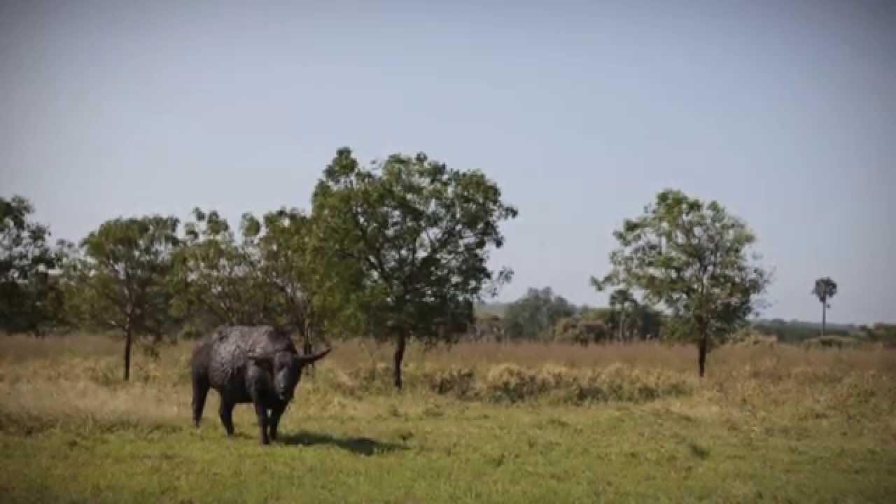 Taman Nasional Baluran Banyuwangi Youtube Kab