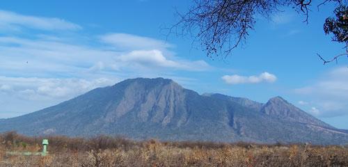 Taman Nasional Baluran Situbondo Memiliki 26 Jenis Satwa Terletak Wilayah