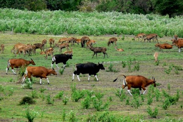 Taman Nasional Baluran Sun Java Kab Banyuwangi