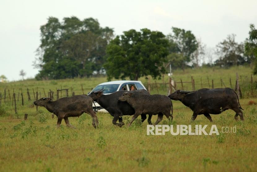 Taman Nasional Baluran Tawarkan Wisata Foto Pre Wedding Republika Kab