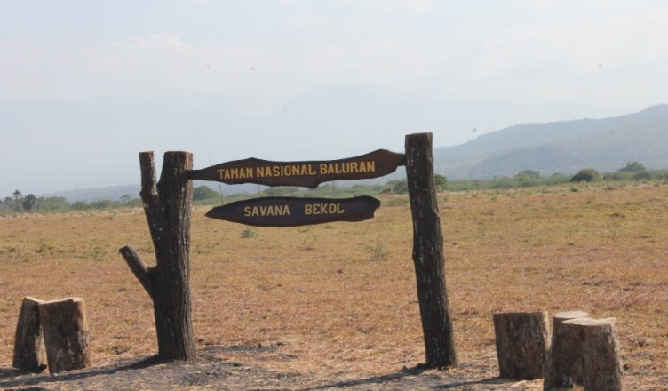 Tips Berwisata Taman Nasional Baluran Paket Wisata Tour Kab Banyuwangi