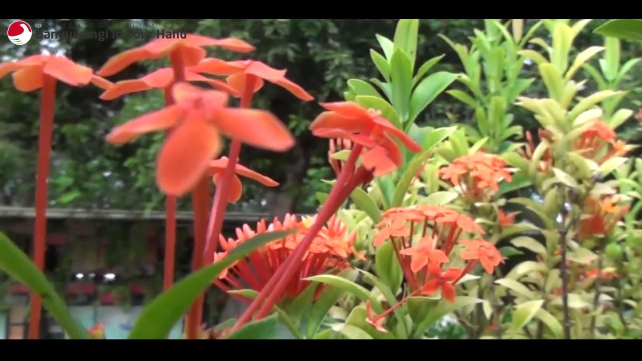 Banyuwangi Hand Taman Sri Tanjung Youtube Sritanjung Kab