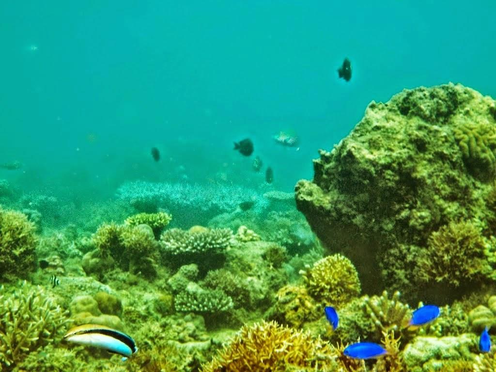 Banyuwangi Miliki Surga Tersembunyi Teluk Biru Namanya Kab