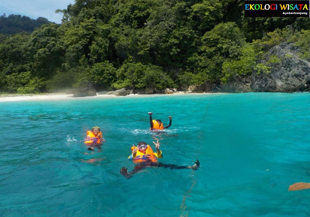 Ekologi Wisata Teluk Banyu Biru Blue Bay Berbagai Macam Biota