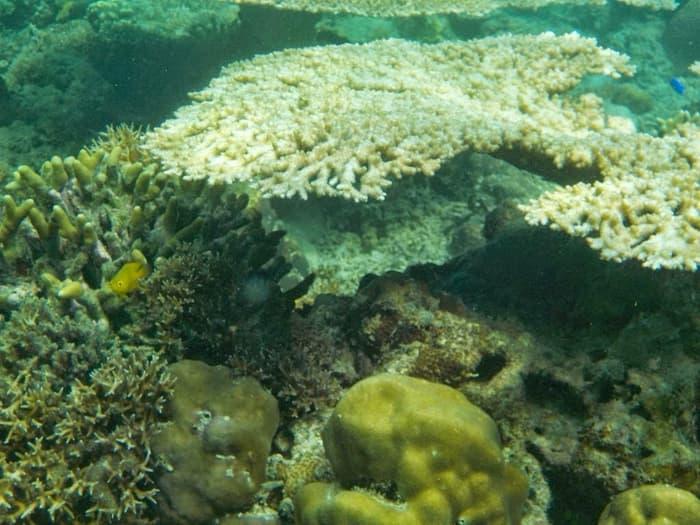 Jual Paket Wisata Teluk Biru Banyuwangi Cantik Tokopedia Kab