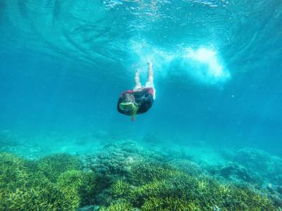 Kementerian Pariwisata Menikmati Biru Surga Tersembunyi Snorkeling Teluk Banyuwangi Foto