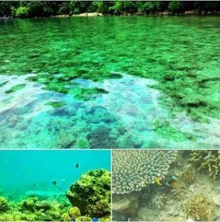 Lokasi Teluk Biru Berada Muncar Banyuwangi Balik Semenanjung Sembulungan Masuk