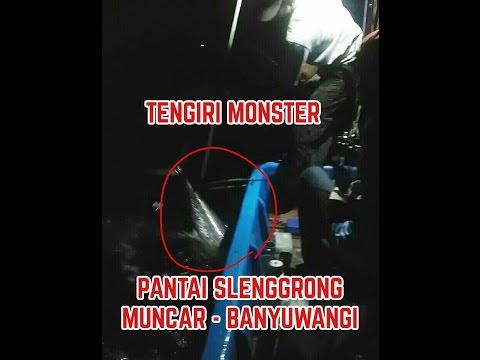 Mancing Ikan Monster Pulau Senggrong Teluk Biru Big Fish Kab