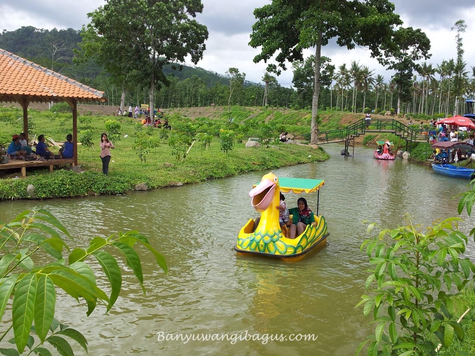 Tempat Wisata Banyuwangi Cocok Liburan 10 Waduk Sidodadi Glenmore Umbul