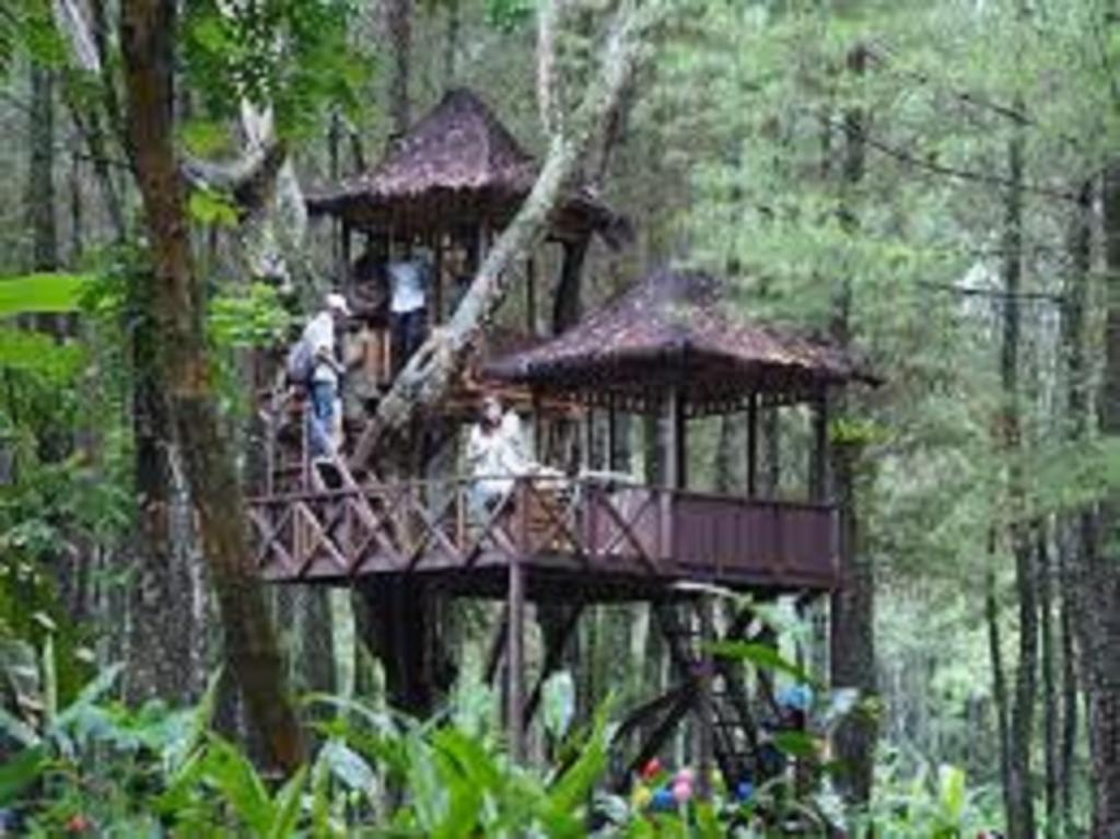 Hotel Wisata Pinus Songgon Banyuwangi Indonesia Booking Gallery Image Property