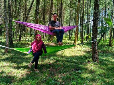 Jalan Menuju Rumah Pohon Hutan Pinus Songgon Banyuwangi Rute Wisata