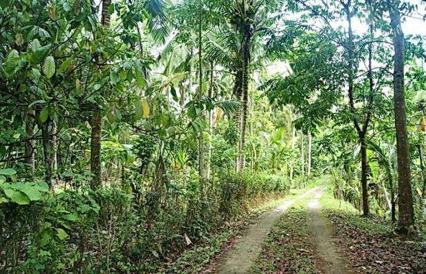 10 Tempat Wisata Blitar Makam Bung Karno Wajib Dikunjungi Agrowisata