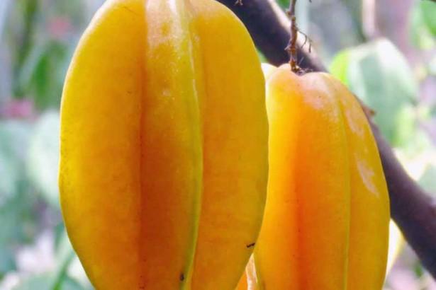16 Obyek Wisata Blitar Patut Dikunjungi Agrowisata Belimbing Karangsari Kab