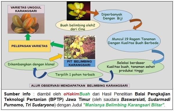 Belimbing Karangsari Buah Oleh Blitar Online Ohakimbuah Alur Observasi Produk
