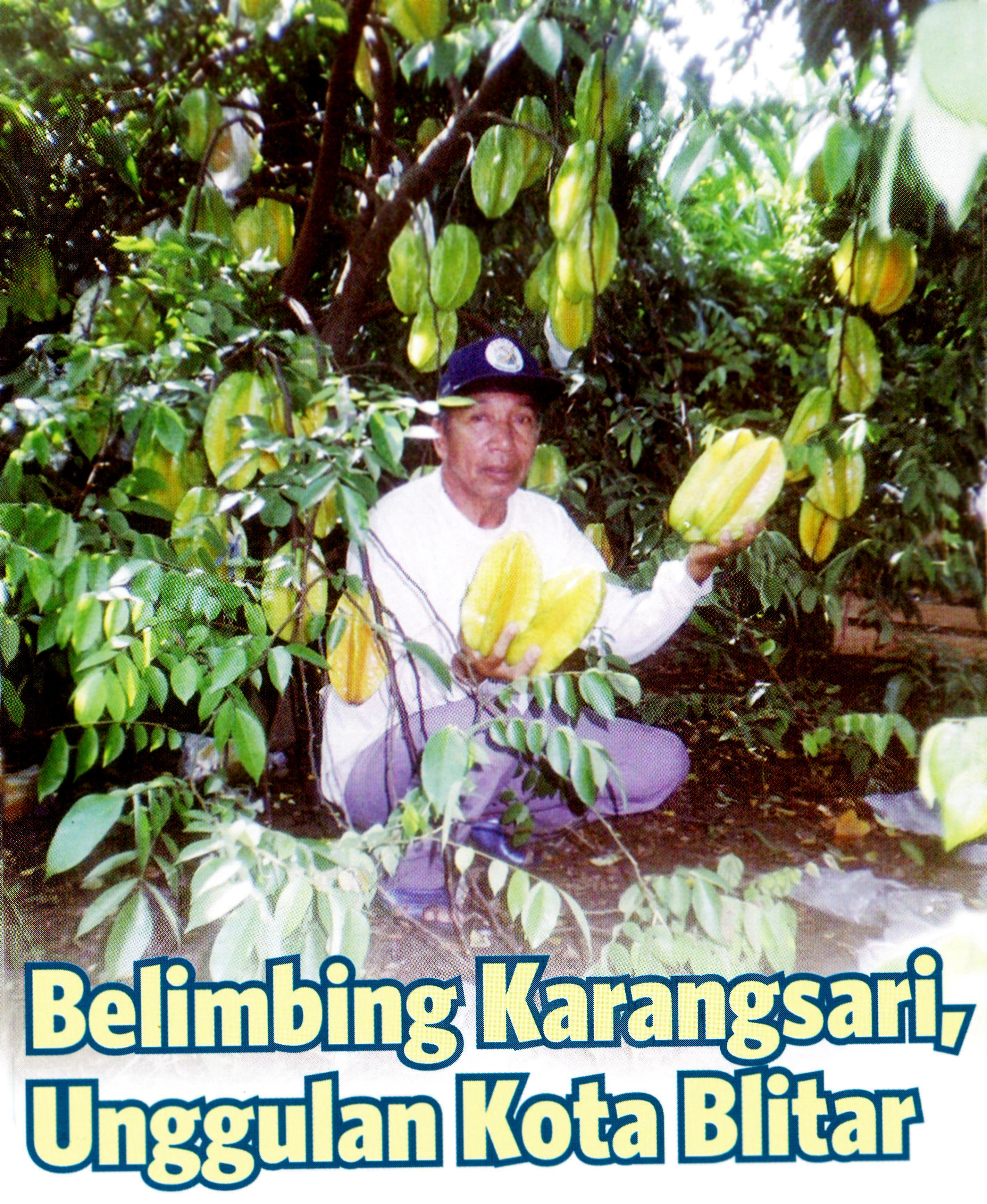 Belimbing Kota Blitar Pusaka Jawatimuran Blitar0001 Agrowisata Karangsari Kab