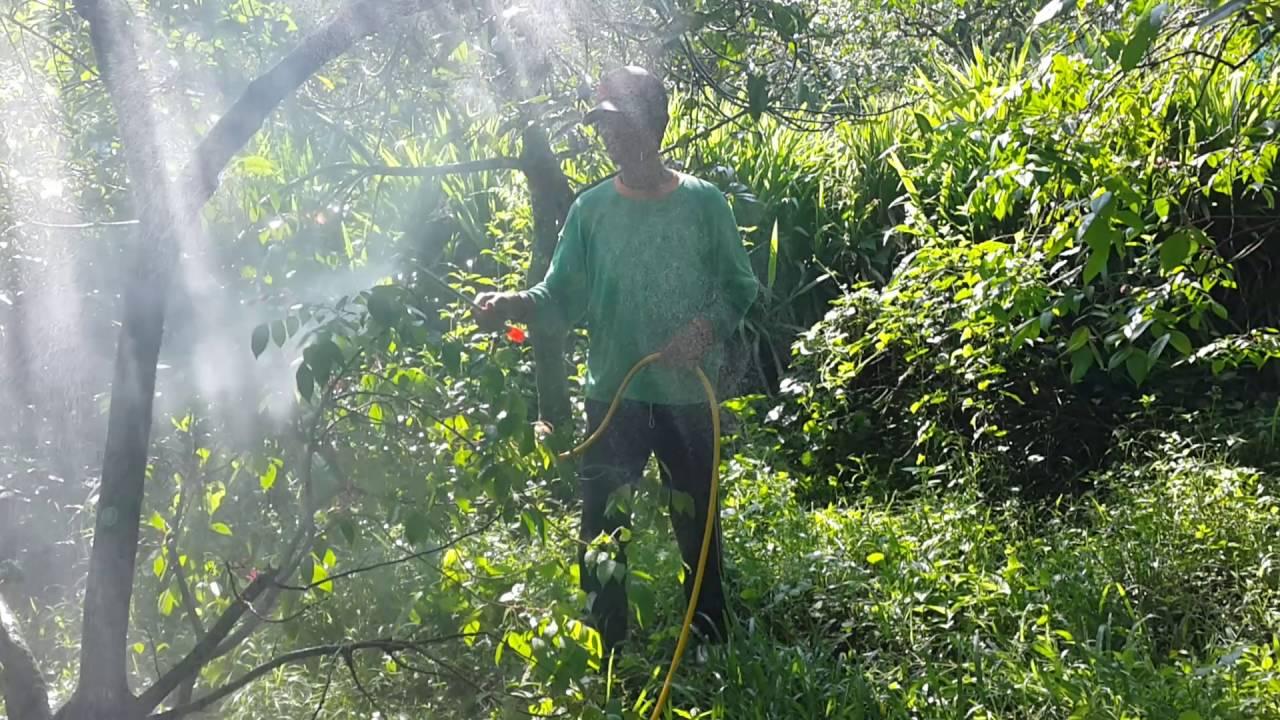 Kebun Blimbing Daerah Blitar Youtube Agrowisata Belimbing Karangsari Kab