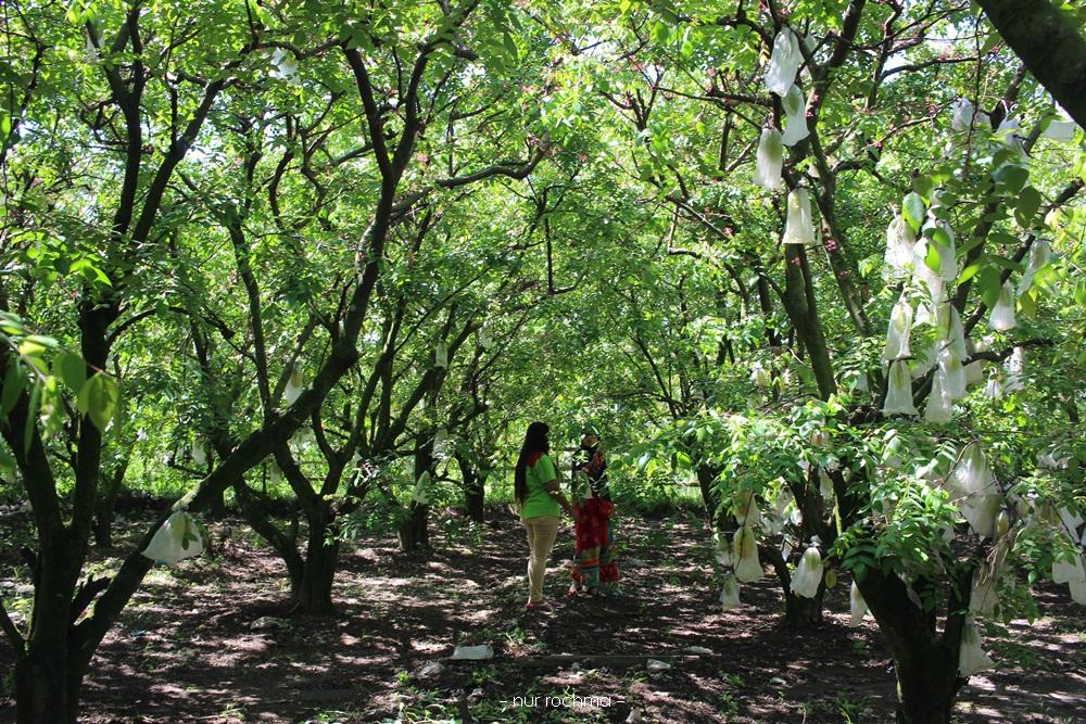 Lovely Mom Agrowisata Belimbing Karangsari Blitar Daripada Kelamaan Kebun Meminta