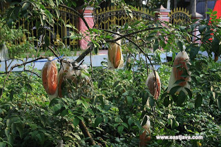 Maduratani Flowers Karangsari Desa Agro Wisata Buah Belimbing Kecamatan Sukorejo